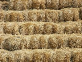 Hay Texture by WKJ-Stock