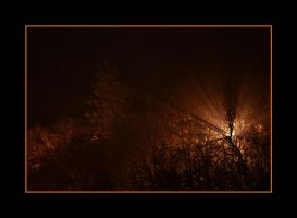 Forest of light 1 by chunydia