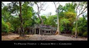 Ta Prohm by Dapicture