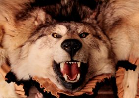 Francisco The Wolf for Sale by NaturePunk