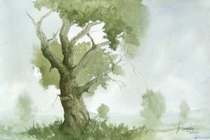 Oak by mwolski