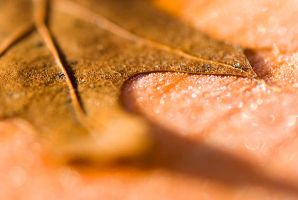 Leaf on Frosted Deck by snak