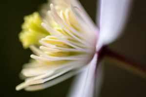 Abstract Flower 02 by WETkitchen