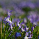 Soft and Blue by IncognitoDesman