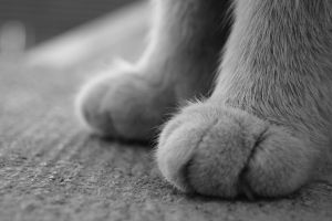 chili's foots by elephanf
