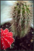 Cactus by CarianneCouture