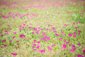 Field of Pink by JeneeMathes