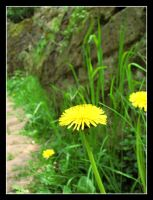 Flowers on the Path by SurfGuy3