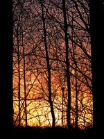Evening colors... by Yancis
