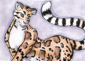Clouded Leopard ACEO by Stormslegacy