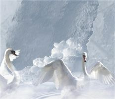 SwanLake by lisaelle