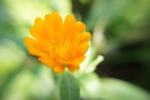 Yellow flower 1 by User-9