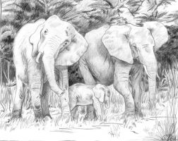 Elephant Family by Mancuspia