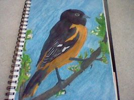 Baltimore Oriole by KeyboardingChihuahua