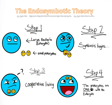 Endosymbiotic Theory by RiceandBeans