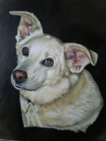 Sandy by petportraitman