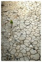 Out of the Cracked Ground by silentvoyces