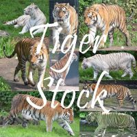 Tiger Stock by Nikki-vdp
