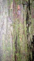 StockTexture -Tree Bark by rockgem