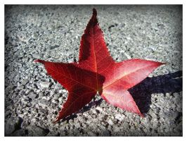 A Red Leaf by rosanakooymans