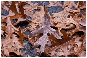 Leaves on The Driveway by tCentric-media