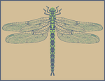 Southern Hawker Dragonfly by SaintBonkers