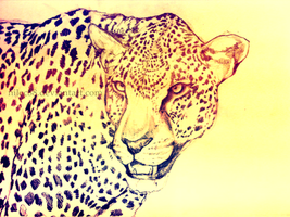 Leopard by nilec88