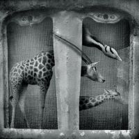 theZoo by anapt