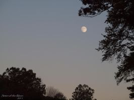 ...Beautiful Moon by Sister-of-the-Moon
