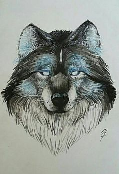 Blue wolf by Ycraine