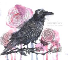 Black Raven, Red Roses by Carcaneloce
