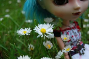 Daisies by BedraggledKitty