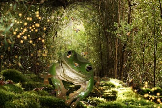 Frog by iblushay