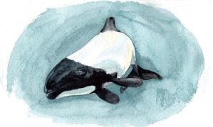 Commerson's dolphin by JeyBirn