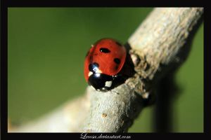 lonely ladybug by Lecosa