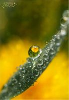 Buttercup reflection ~ Raindrop I by AStoKo