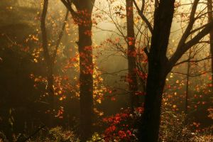This Morning's View by ncphotojunkie