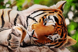 Tiger by Tobal-gz