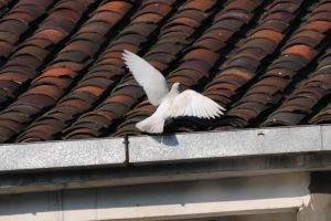 Dove 1.1 by mocking-turtle-stock