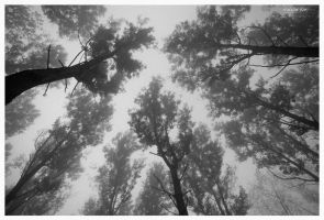 Looking Up by Natalieb78