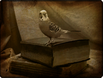 A Budgie of Higher Learning by StormiePhotos