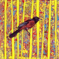 """""""orchard oriole"""" by micahsherrill"""