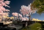 Toowong Cemetary False Colour III by nutmeg-42