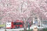 D.C. in Bloom by Ginesthoi