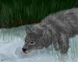 Wolf in the Water by neecolette