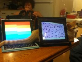 Me Getting Creative With My iPads and Cat by pokelover586