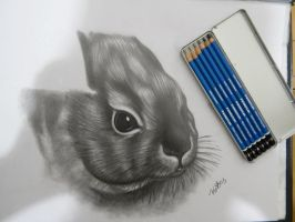 Black and White Drawing of a Bunny by kakosuranosx