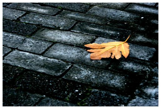 Leaf on the Ground by houseofjealouslovers
