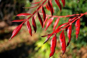 Red Leaves by adamforce