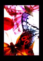 Butterflies by Phalena